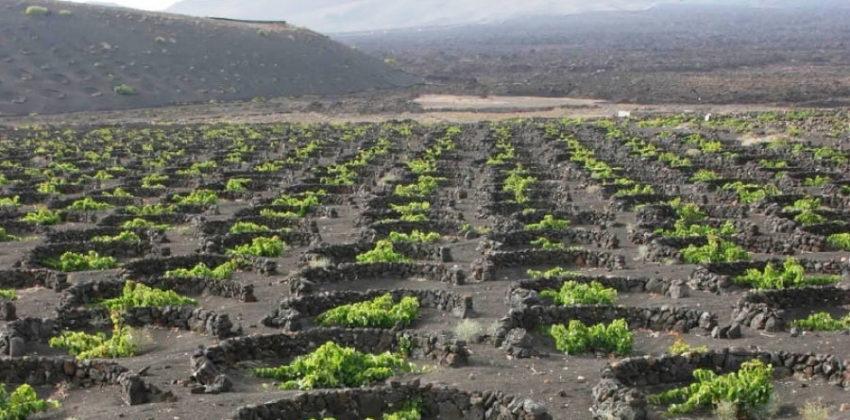 I vini di Lanzarote negli USA e in Canada